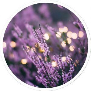 Herbalist-Essential-oils-Pranarom-Sunshine-Coast